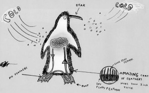 Extreme Animals penguin